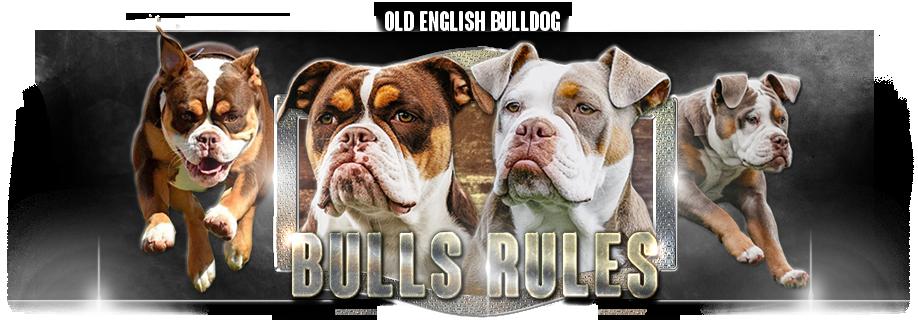 Staroanglický buldok Bulls Rules